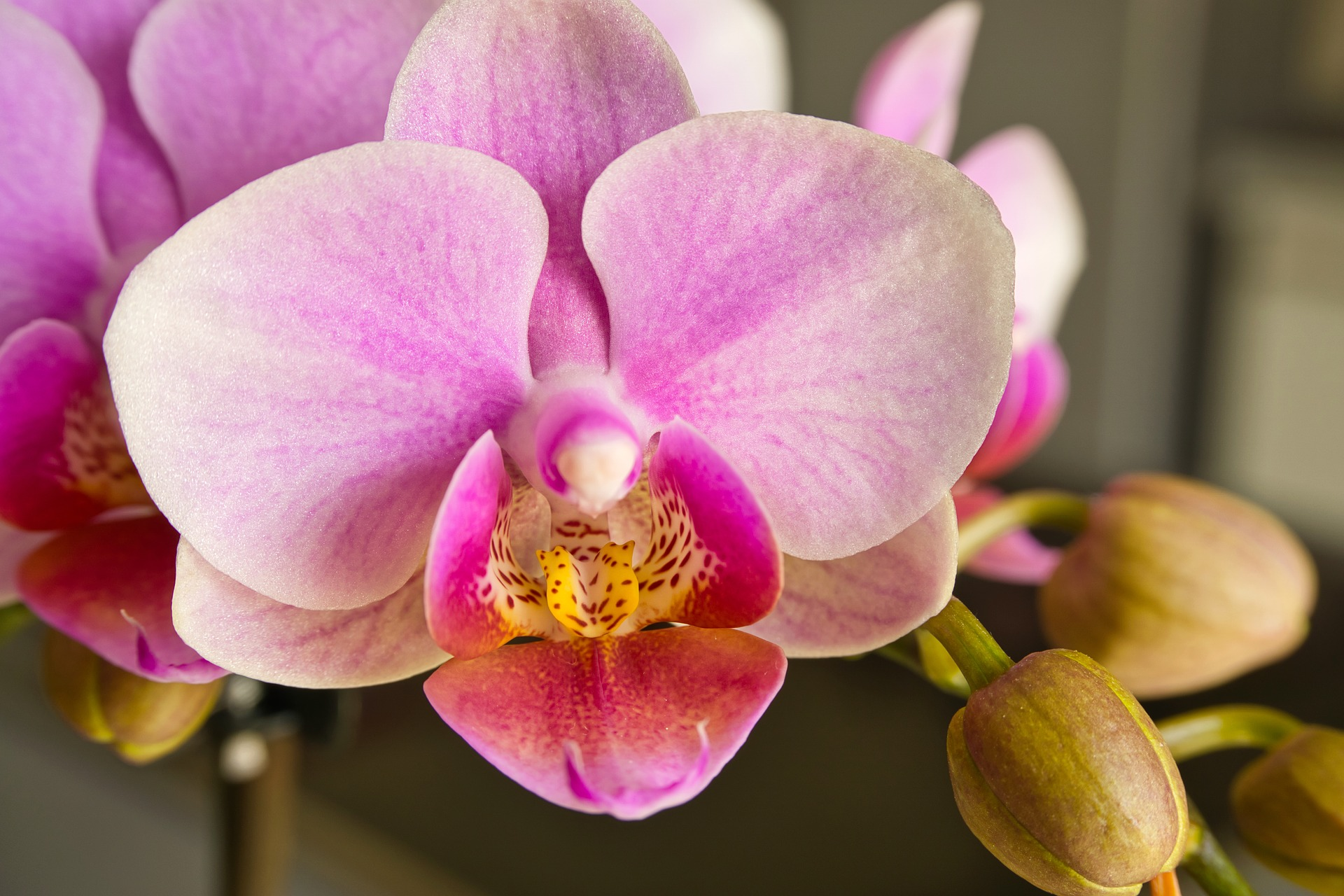Orchideen unterstützen ein gutes Mikroklima im Schlafzimmer und ...