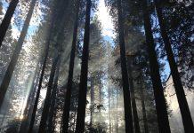 Erholung pur und für jeden Geldbeutel passen - Waldbaden. Bildquelle: Pixabay.de