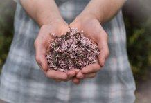 Früher selbstverständlich, heute eher nur noch selten - selbst gesammelte Wildkräuter und Blumen. Bildquelle: ©Olivia Snow/Unsplash.com