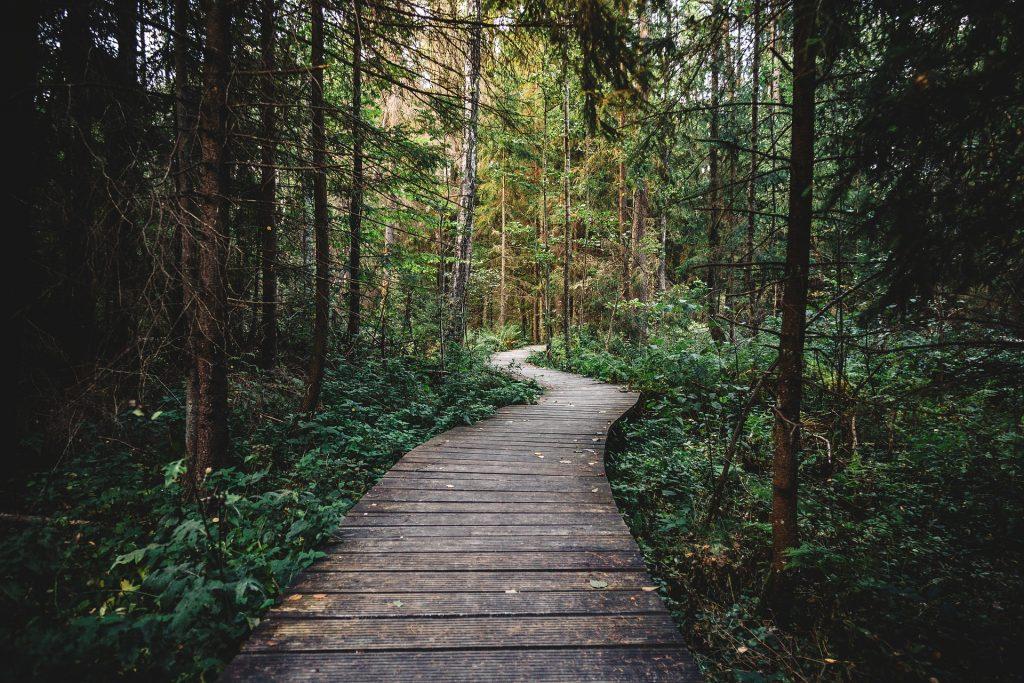 Vor allem nach Wanderungen im Wald sollte man sich genau nach Zecken untersuchen. Bildquelle: Pixabay.de