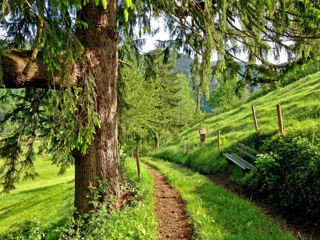 Zahlreiche Waldwege mit herrlichen Aussichten durchziehen das ganze Land. Bildquelle: Jan Schulz/Unsplash.com