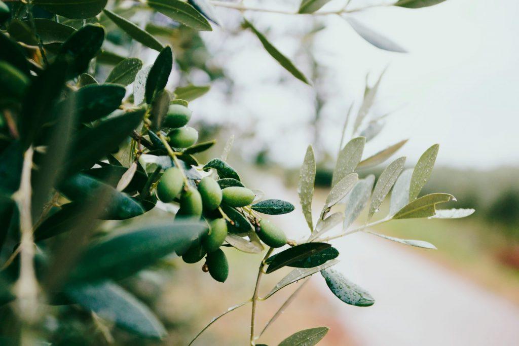 Oliven sind perfekt geeignet für die Herstellung von Seifen und Shampoos. Bildquelle: © Nazar Hrabovyi / Unsplash.com