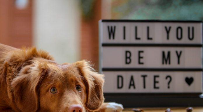 Bei einem ersten Treffen kann auch ein gemeinsames Hobby wie ein Hund ein toller Aufhänger sein. Bildquelle: © Laula the Toller / Unsplash.com