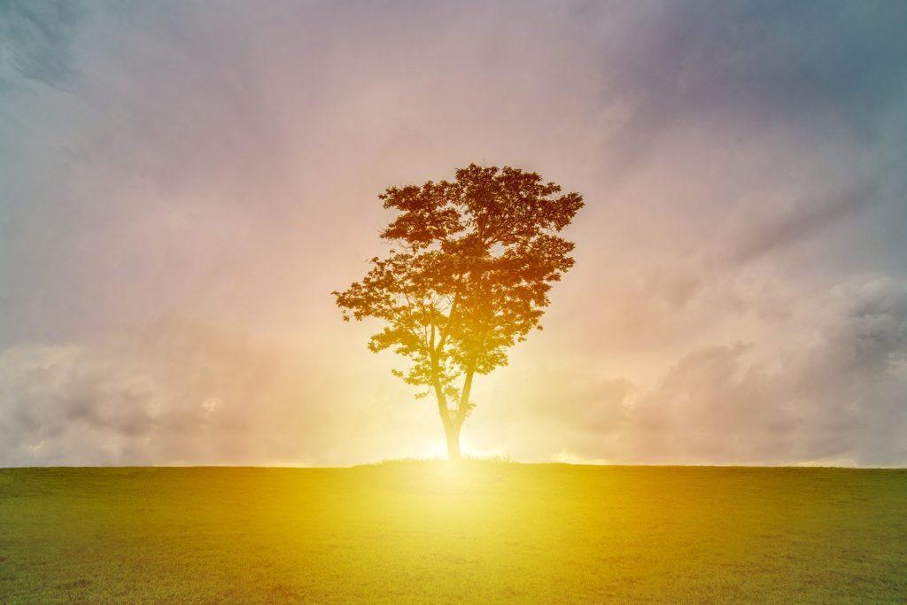 Den richtigen Moment nicht verpassen und Loslassen, das wünscht sich Pater Anselm Grün. Bildquelle: © Terry Tan de HaoUnsplash.com