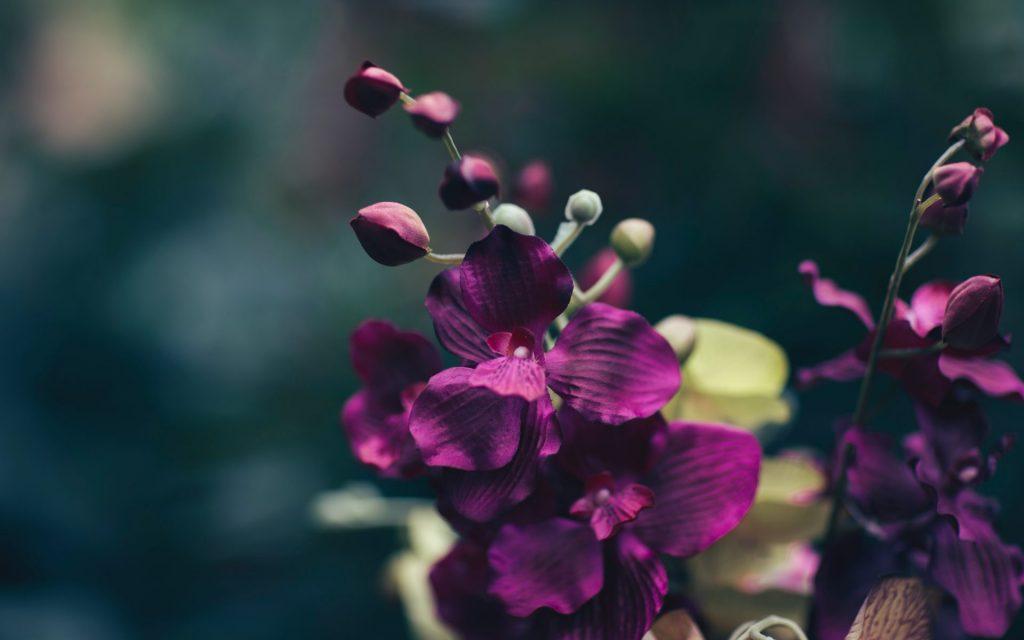 Aufgrund des besonderen Klimas findet man auf Gotland eine Vielzahl an wild wachsenden Orchideen. Bildquelle: © Jian Xhin / Unsplash.com