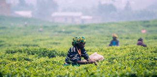 Manager ohne Grenzen helfen den Menschen in entwicklungsbedürftigen Ländern mit ihrem Know-how. Bildquelle: © Maxime Niyomwungeri / Unsplash.com