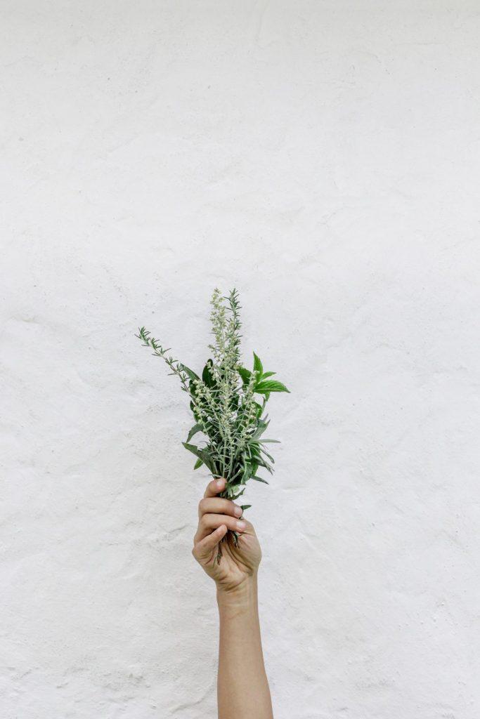 Die Pflanzenwelt hält eine Menge Mittel bereit, um einer beginnenden Winterdepression entgegen zu wirken. Bildquelle: © NordWood Themes / Unsplash.com