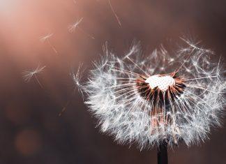 Wenn man vergesslich wird und die Erinnerungen verblassen, dann sprechen wir schnell von Demenz oder Alzheimer. Doch was verbirgt sich eigentlich hinter diesen Krankheitsbildern? Bildquelle: Pixabay.de