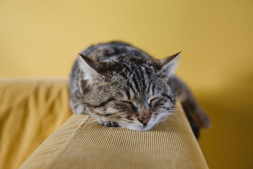 Katzen sind wunderbare Mitbewohner, erfordern aber nicht soviel Aufmerksamkeit wie Hunde. Bildquelle: © Sabri Tuzcu / Unsplash.com