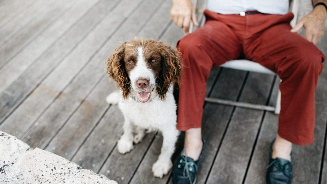 Haustiere im Alter ja oder nein? Mit der richtigen Vorbereitung und Auswahl muss man nicht darauf verzichten. Bildquelle: © Sweet Ice Cream Photography / Unsplash.com