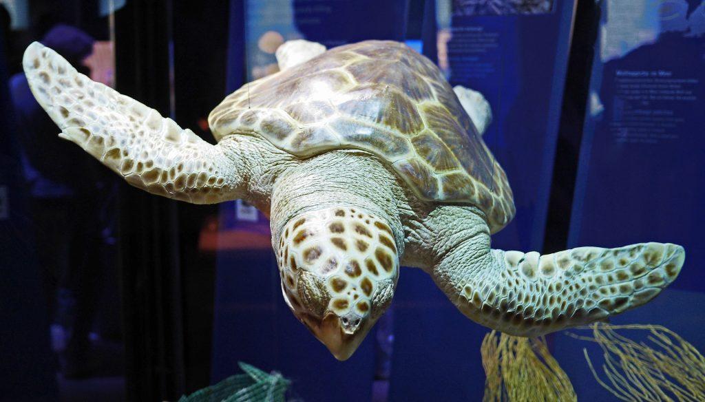 Das Ozeanum in Stralsund lädt zu einem Bescuh und dem Kennenlernen der Unterwasserwelt ein. Bildquelle: Pixabay.de