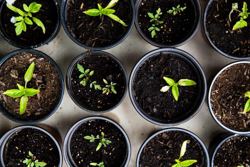 Setzlinge können ganz wunderbar in der Wohnung oder in einem kleinen Gewächshaus, auf dem Balkon oder der Terrasse, vorgezogen werden. Bildquelle: © Markus Spiske / Unsplash.com