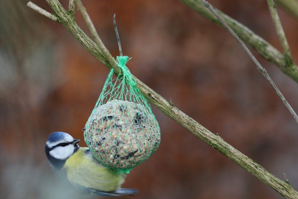 Die kleinen Dinge im Leben können in der Arbeit mitWidmen Sie sich im Umgang mit Menschen mit Dement den ganz normalen Dingen des Lebens und beobachten Sie einfach mal wieder die Vögel in der Natur. Bildquelle: © Julian Jakob Strauss / Unsplash.com
