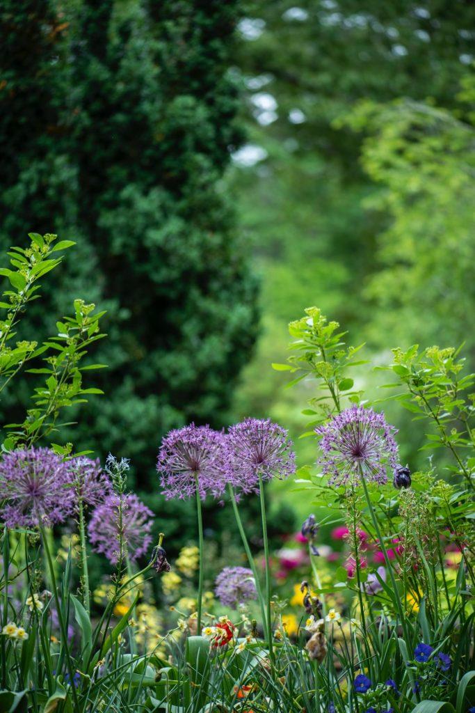 Pflanzen waren die große Leidenschaft von Loki Schmidt. Bildquelle: © Erda Estremera / Unsplash.com