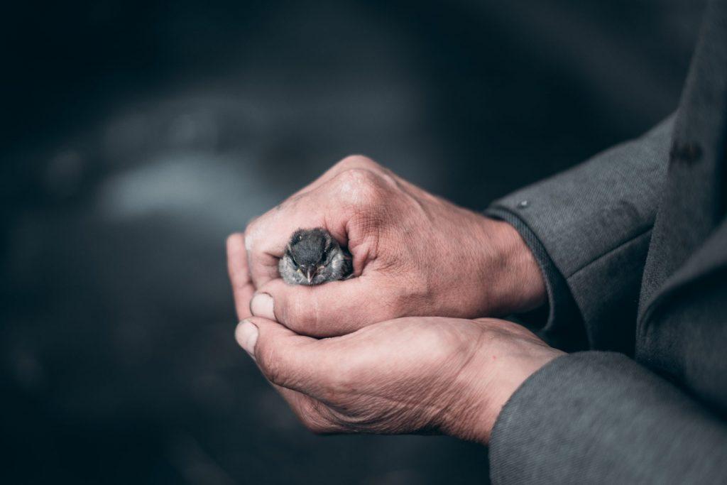 """""""Der Spatz in der Hand, ist besser als die Taube auf dem Dach."""" Das Sprichwort passt hervorragend zur Aktie der Deutschen Telekom. Bildquelle: © Elijah O´Donnell / Unsplash.com"""