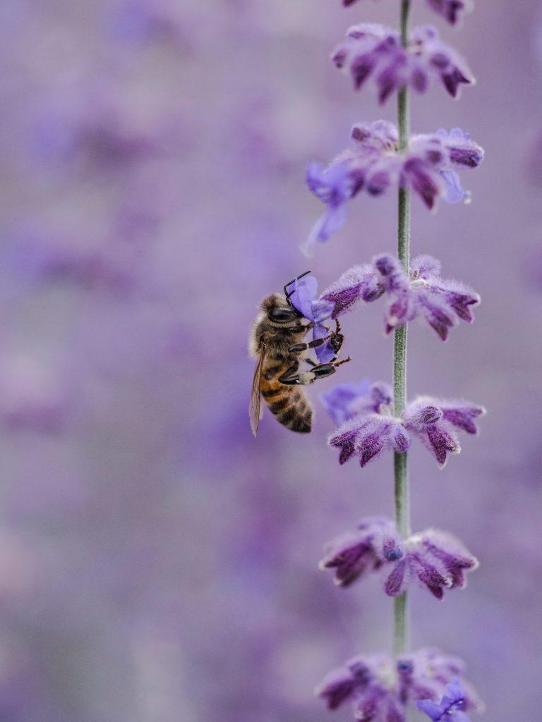 Insekten lassen sich auf natürlich Art und Weise durch eine bestimmte Blumenauswahl schon deutlich reduzieren. Bildquelle: © Aaron Burden / Unsplash.com