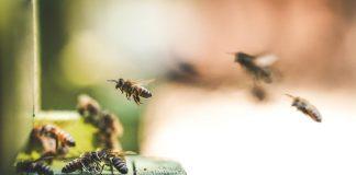 Auf der einen Seiten schützenswert, auf der anderen Seite Störenfriede: Insekten. Bildquelle: © Eric Ward / Unsplash.com