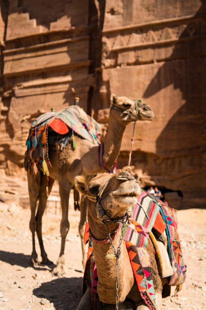 Eines der verlässlichsten Fortbewegungsmittel sind die Dromedare. Sie sind in ihrer Lebensform absolut den Wüstenverhältnissen angepasst. Bildquelle: © Simon Goetz / Unsplash.com