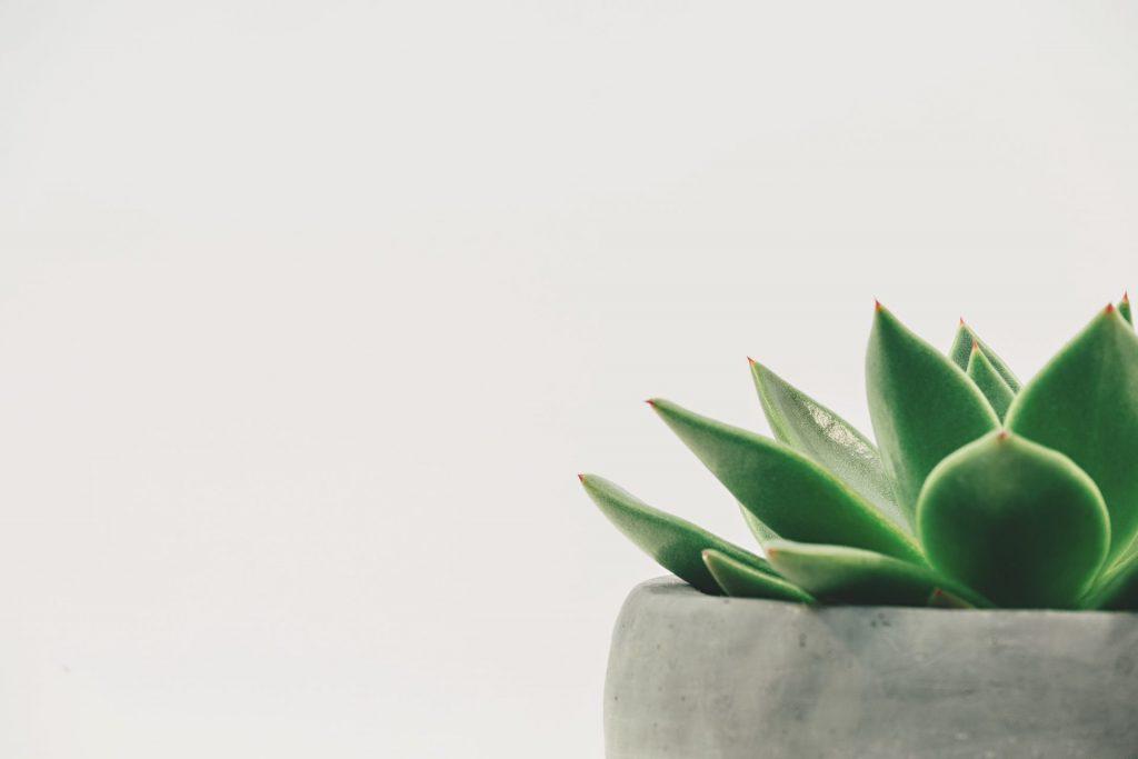 Sukkulenten eignen sich hervorragend für die Wohnung und sind pflegeleicht. Bildquelle: © Scott Webb / Unsplash.com
