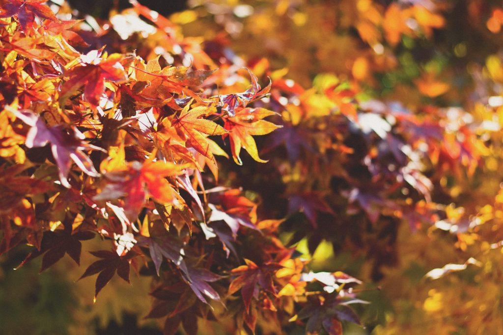 Herbstliche Töne lassen jeden Geburtstagstisch wunderschön aussehen und strahlen eine gewisse Gemütlichkeit aus. Bildquelle: © Dayne Topkin / Unsplash.com