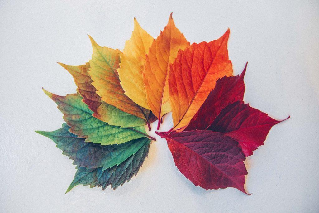 Jede Jahreszeit hat ihre Farben und die sollten wir unbedingt zur Orientierung für die an Demenz erkrankten Menschen berücksichtigen. Bildquelle: © Chris Iawton / Unsplash.com