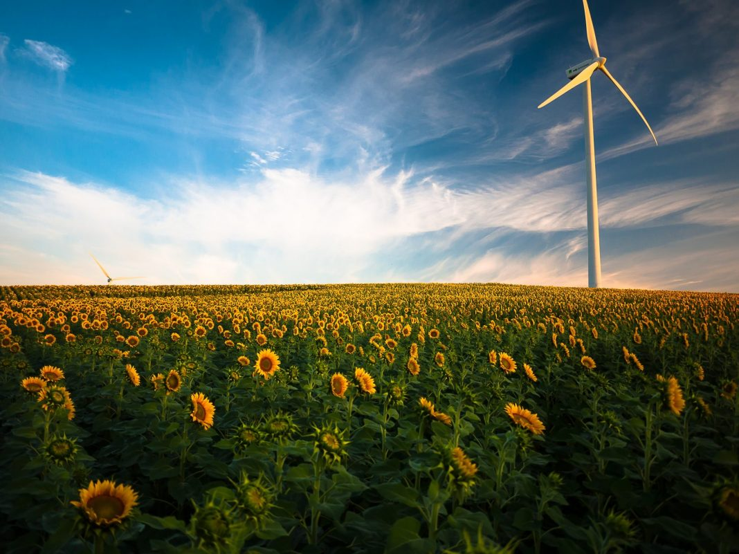 Kann man mit Nachhaltigkeit Geld verdienen? Martin Beier stellt Öko Anlagen auf Prüfstand. Bildquelle: © Gustavo Quepon / Unsplash.com