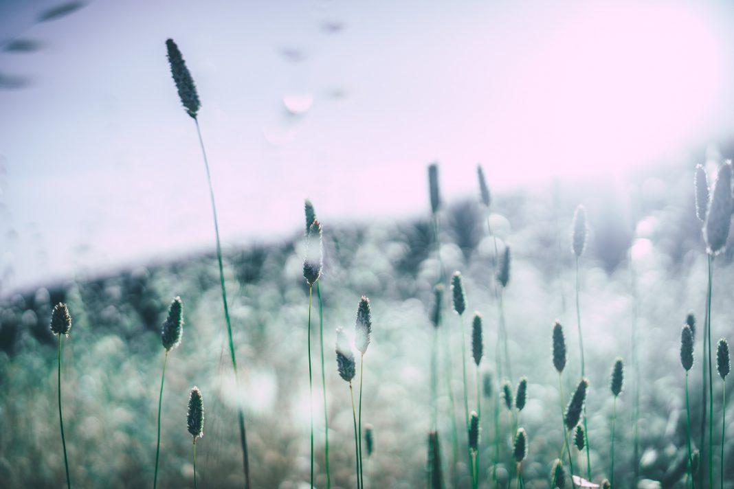 Wenn die Pollen fliegen, dann juckt die Nase und Tränen die Augen. Es ist wieder heuschnupfenzeit. Bildquelle: © Pixabay.com