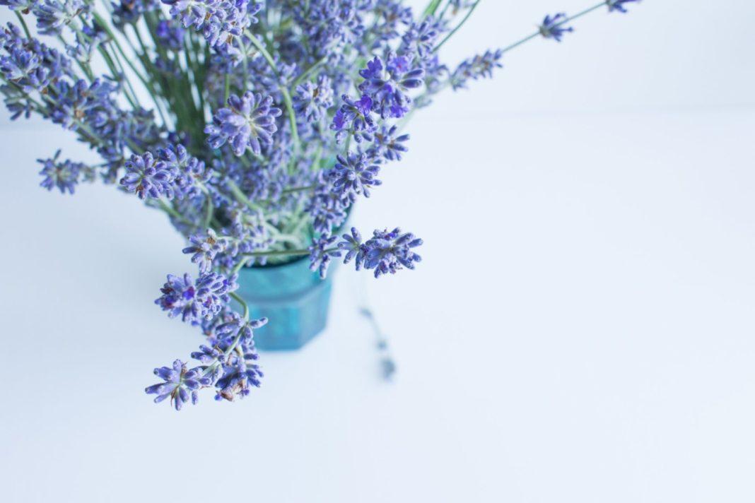 Die guten alten Hausmittel sind meist die effektivsten im Kampf gegen die Mücken. Bildquelle: © Olga Tutunaru / Unsplash.com