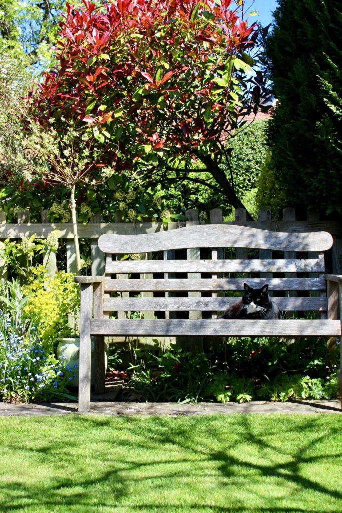 Damit unser Garten auch in dürren Zeiten eine kleine Oase bleibt, ist die richtige Bewässerung ganz wichtig. Bildquelle: © Darren Richardson / Unsplash.com