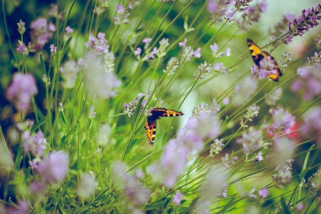 Der nächste Sommer kommt bestimmt und damit auch die Frage, wie wir unsere Blumen und Insekten gut und ausreichend mit Wasser versorgen können. Bildquelle: © Emiel Molenaar / Unsplash.com