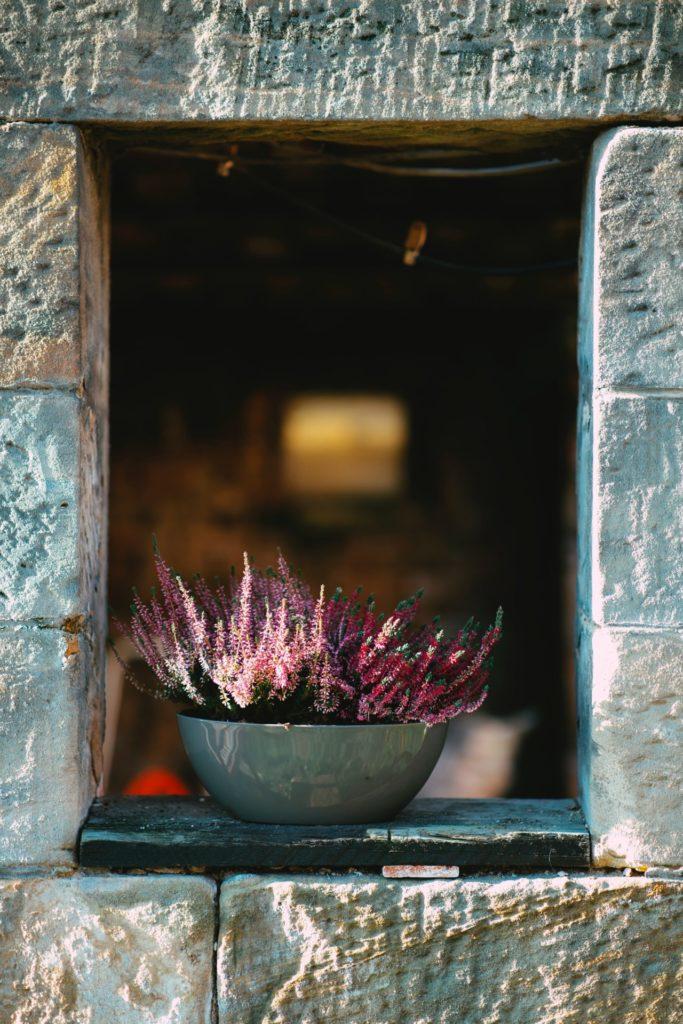 Eine alte Salatschüssel lässt sich eben auch ganz wunderbar als Blumentopf nutzen. Bildquelle: © Markus Spiske / Unsplash.com