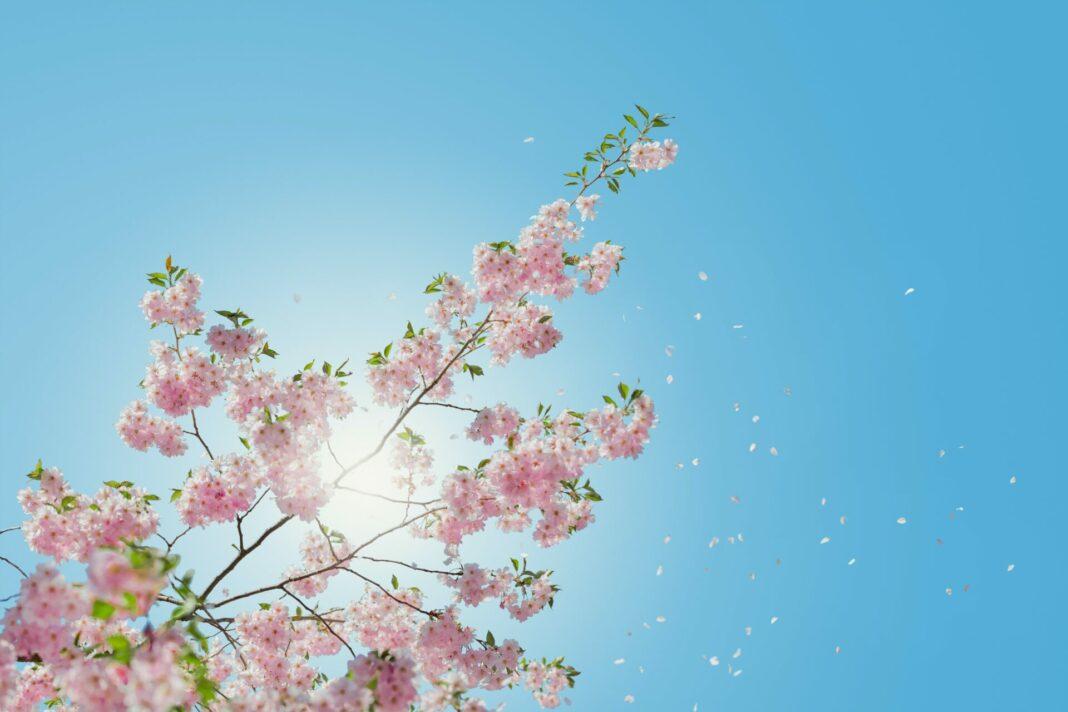 Gerade im beginnenden Frühling ist ausreichender Sonnenschutz sehr wichtig. Bildquelle: © Anders Jilden / Unsplash.com