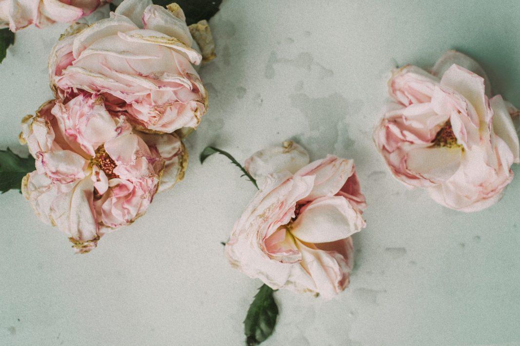 Der Verlust eines geliebten Menschen ist immer schlimm. Um so besser ist es, wenn dieser die Art seiner Bestattung bereits zu Lebzeiten bestimmt hat. Bildquelle: © Besdaria Shevtsova / Unsplash.com
