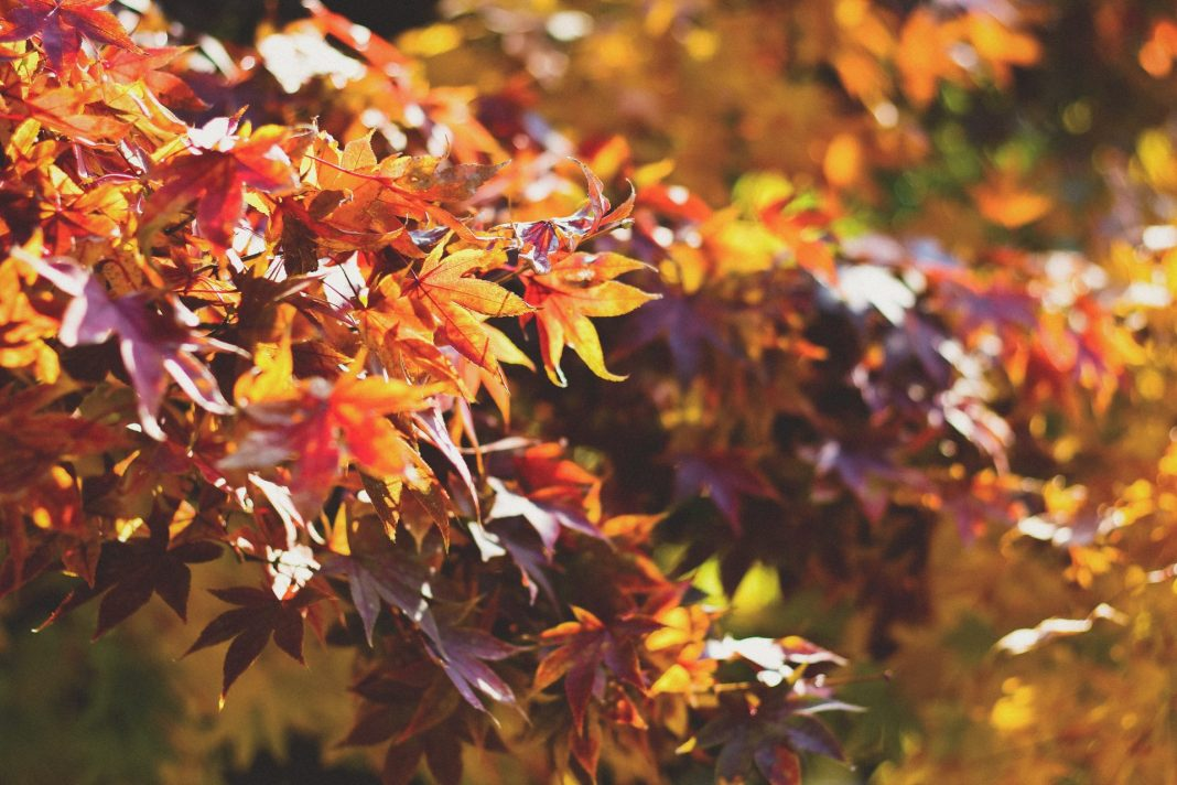 Die Trendfarben in diesem Herbst sind der Jahreszeit absolut angepasst. Bildquelle: © Dayne Topkin / Unsplash.com