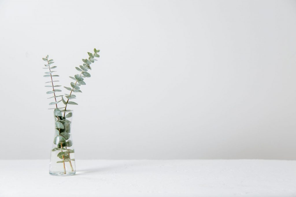 Schon ein paar Zweige Eukalyptus sehen wunderbar aus und können wie eine Aromatherapie wirken. Bildquelle: © Tim Chow / Unsplash.com